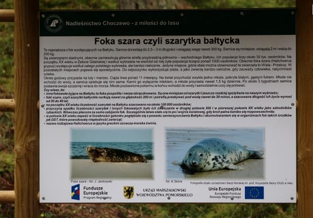 Tablica o fokach Słajszewo (PrtSc blog WWF)