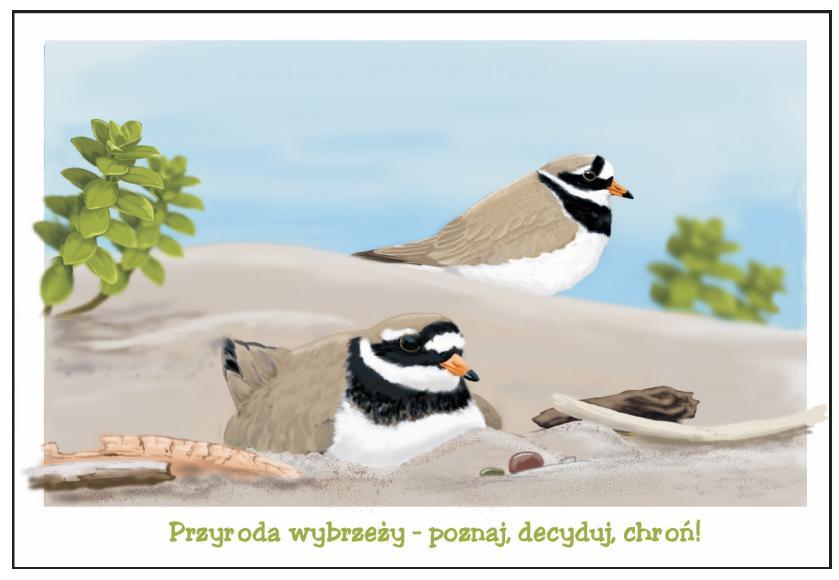 pocztowka_sieweczka_zestawi
